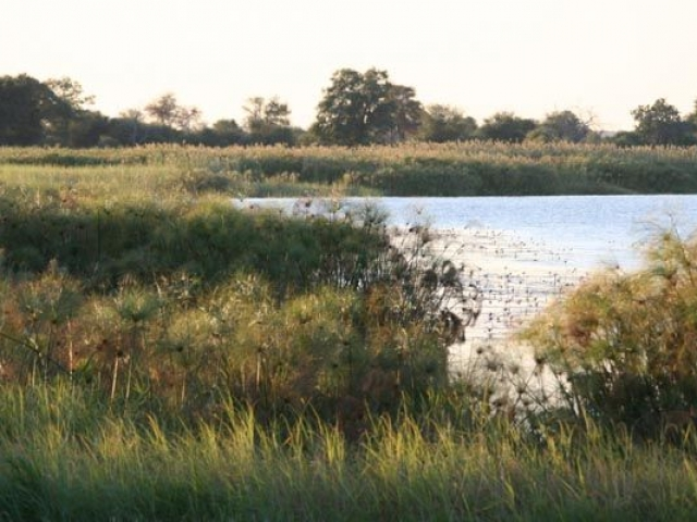 Mahango National Park, Caprivi Strip, Namibia