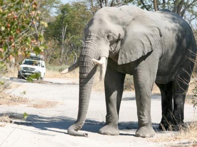 Elephant block, Moremi Game Reserve, Botswana