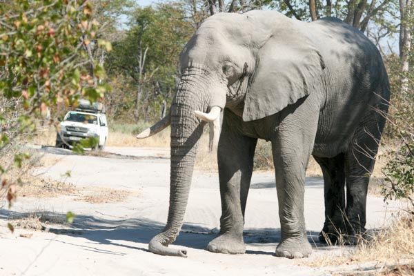 Self-drive safaris - Botswana