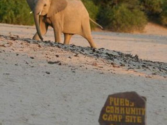 Desert elephant, Puros Community Campsite, Damaraland, Namibia