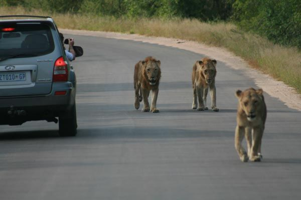 Self drive safaris, SUV Kruger