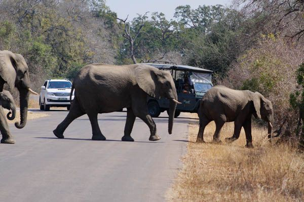 Kruger Under Canvas, South Africa Tours and Packages