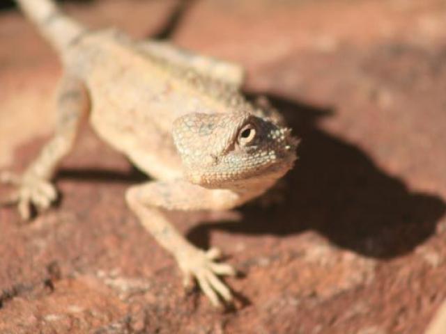Unique desert fauna, Namibia