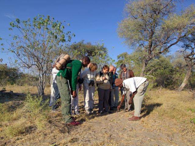 Game Walk in the Okavango Delta