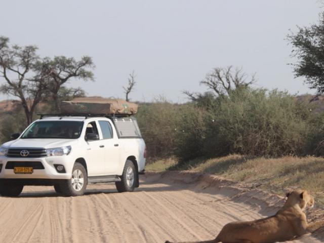 On Safari!