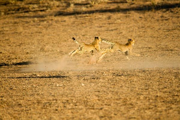 Mabuasehube, Kgalagadi, Botswana
