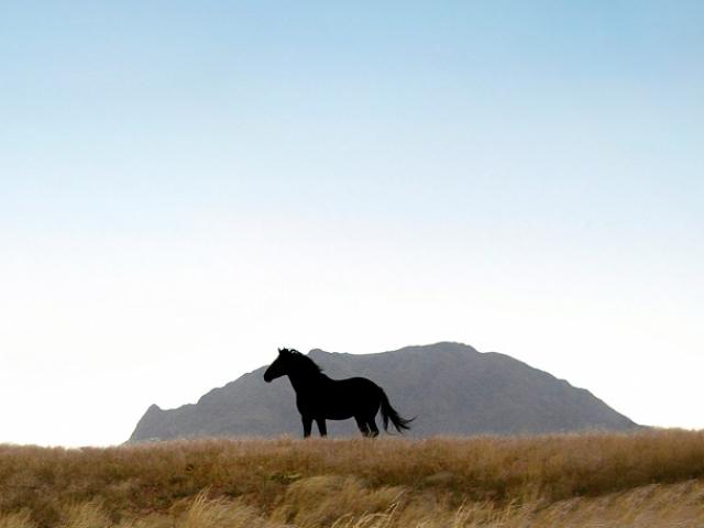 Desert Horses of Namibia