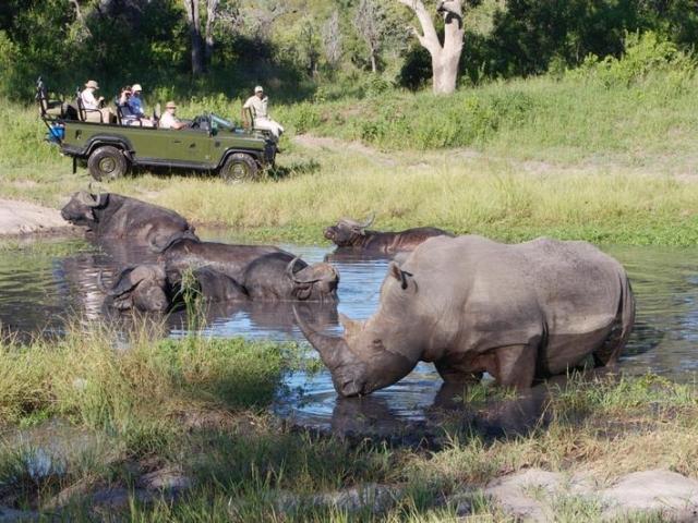 Elephant Plains Lodge game drive