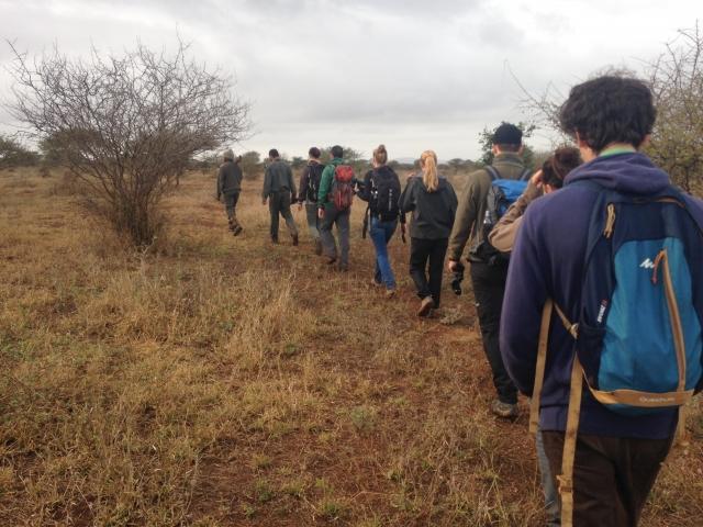 Morning walk with rangers, Kruger National Park