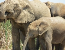 Addo Elephant National Park, The Garden Route, South Africa