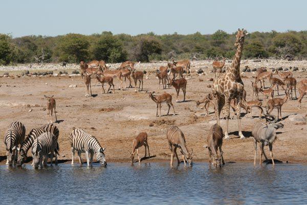 Family safari Table Mountain, Cape Town