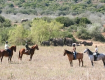 Horse trail, Addo Elephant National Park, Garden Route, South Africa