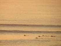 Surfing in Jeffreys Bay, Garden Route, South Africa