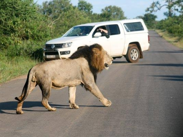 What a great sighting - near Lower Sabie