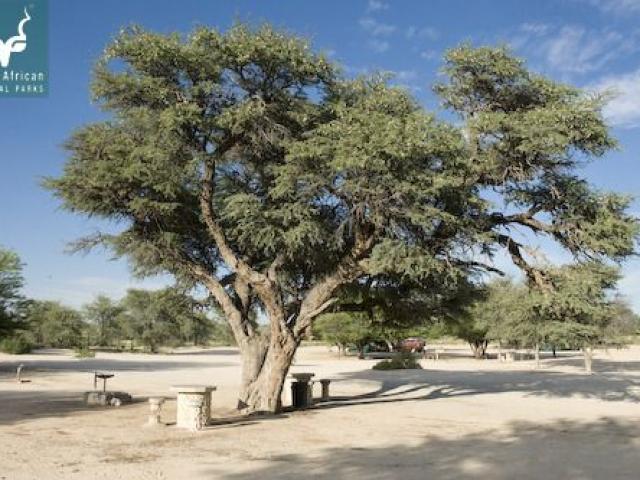 Nossob Campsite, Kgalagadi Transfrontier Park