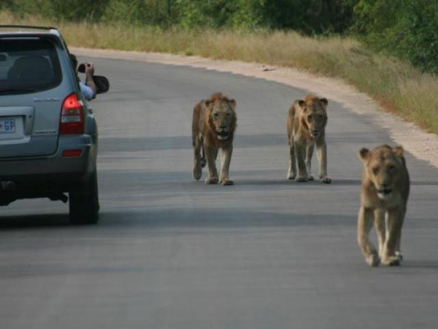 Self-drive Kruger National Park