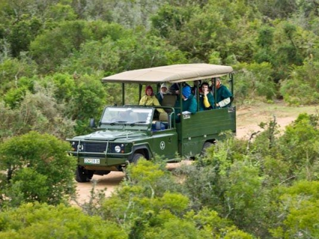 Addo Elephant Game Drive