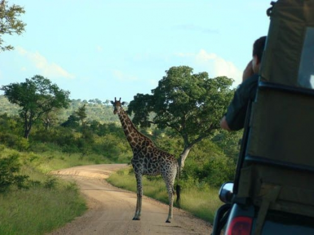 Captivating Kruger Safari