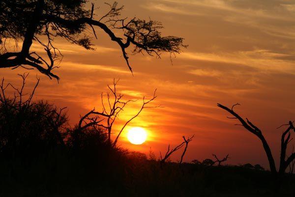 Chobe Savute, Botswana