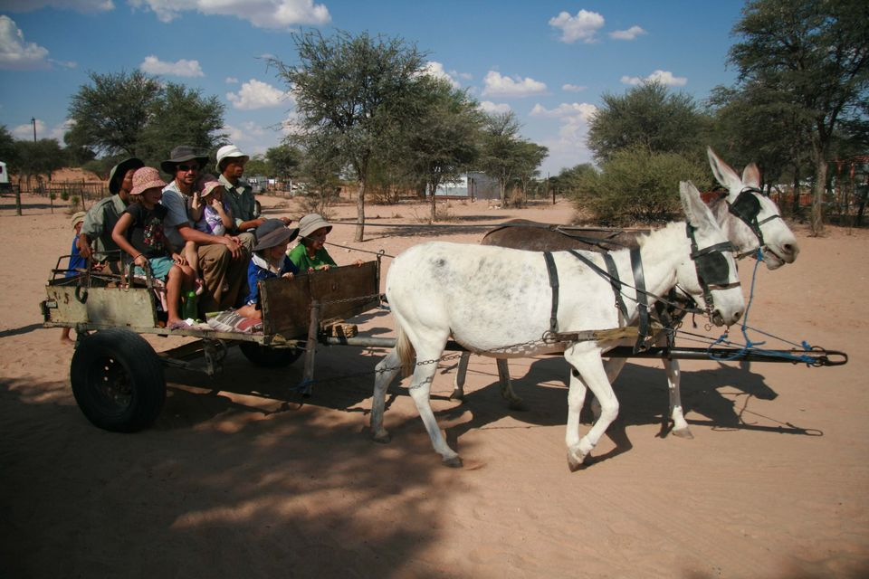 donkey cart ride at the #Khomani San community of Andriesvale, South Africa