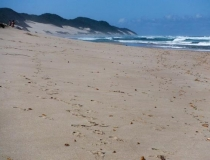 Wild beaches, Kwa-Zulu Natal, South Africa