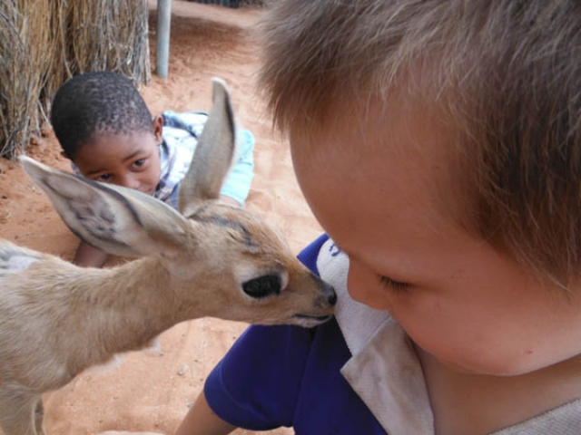 Meeting a rescued steenbok at Om Jan's Farmstay, Kalahari
