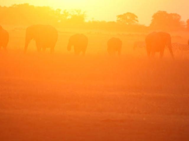 Chobe elephants, Botswana