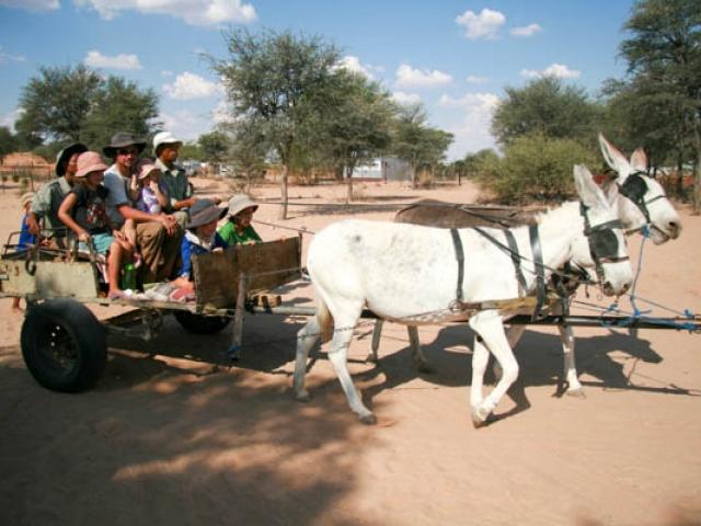 Donkey ride fun!