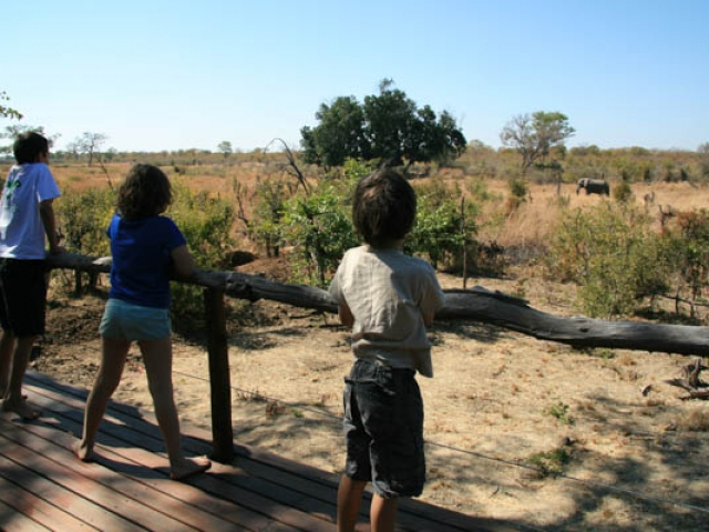 Watching an elephant - Kapula, Hwange National Park, Zimbabwe