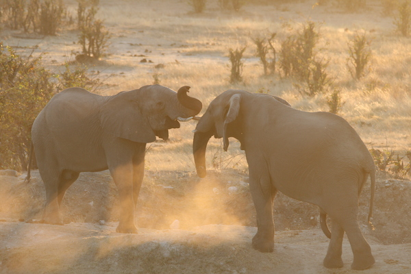Elephants of Hwange