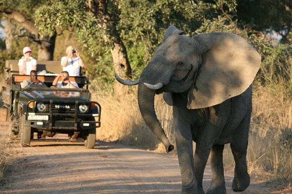 South Luangwa game drive, Zambia