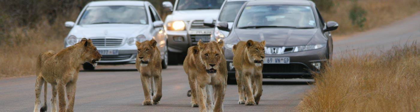 Self drive safari in Kruger, South Africa