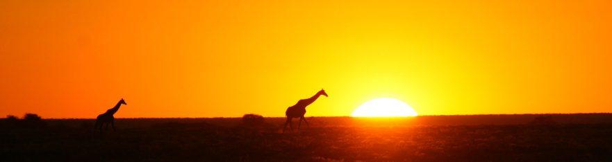 Sunset giraffe Etosha, Namibia