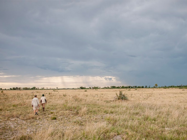 Walking safari in the Okavango Delta