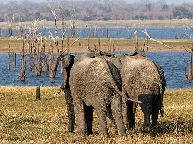 Elephants at Hippo Bay, Kafue National Park
