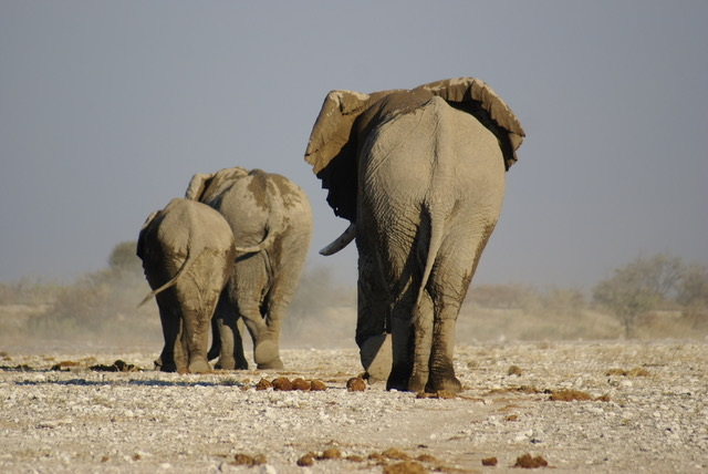 Etosha, Namibia tours and packages