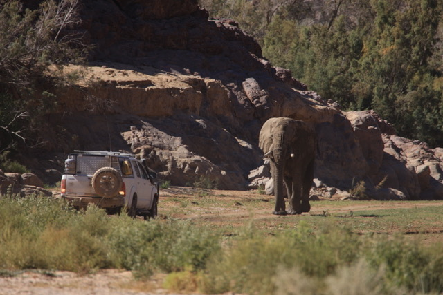Elephant encounter, Puros Canyon