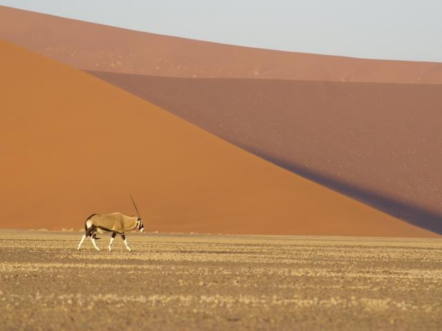 Gemsbok at Sossusvlei, Namib-Naukluft National Park