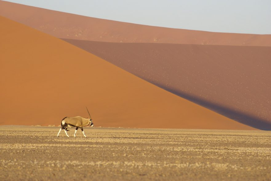 Gemsbok at Sossusvlei, Namib-Naukluft National Park