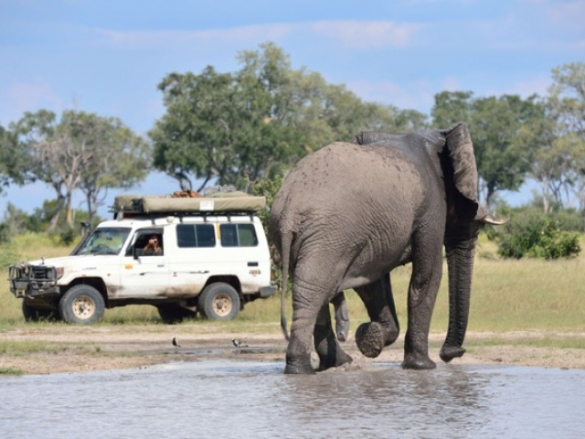 Elephant, Savute (Chobe National Park)