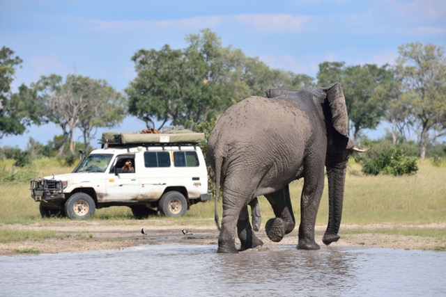 Elephant, Savute (Chobe National Park)