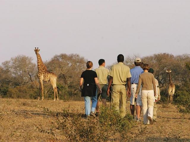Family holiday - Elephant Plains Safari Lodge (Upgrade) - bush walk