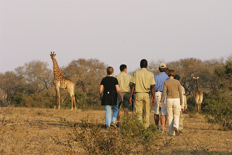 Family Holiday South Africa - Elephant Plains Safari Lodge (Upgrade) - bush walk