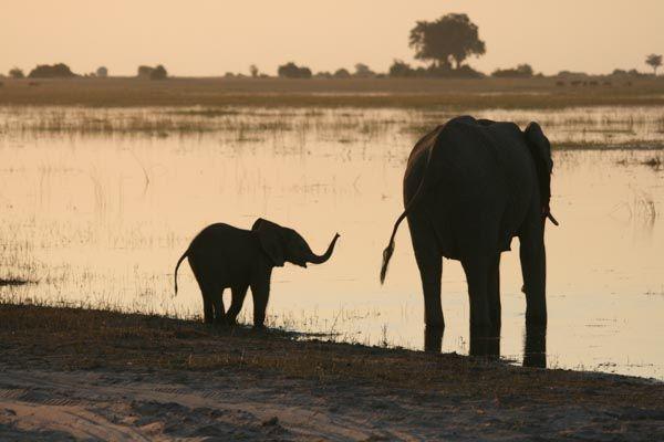 Chobe Riverfront, Visit Botswana