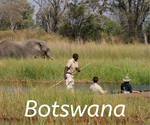 Travel itineraries southern Africa -Botswana,Leopard