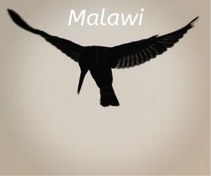 Malawi itineraries