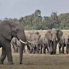 Michelle elephant