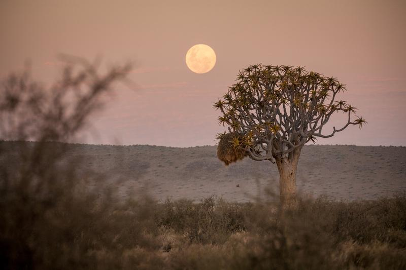 Namibia Wonders - Sunset
