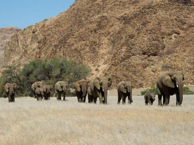 Namibia Wonders - Damaraland