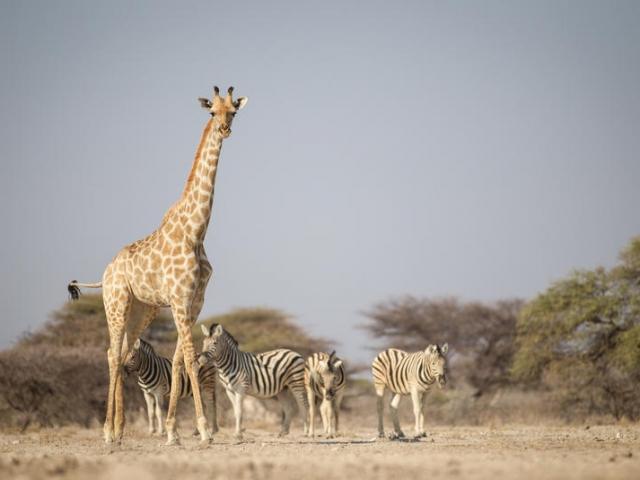 Namibia Wonders - Etosha National Park